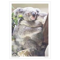 Koala Print 1 Poster