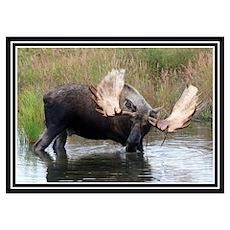Big Boy Moose Poster
