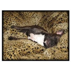 Leopard Bed Frenchie Poster