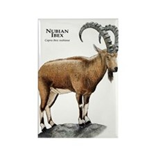 Nubian Ibex Rectangle Magnet