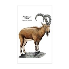 Nubian Ibex Decal