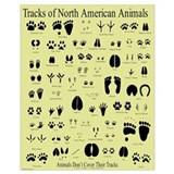 Animal tracks Framed Prints