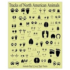 Small Animal Tracks Canvas Art