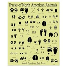 Small Animal Tracks Poster
