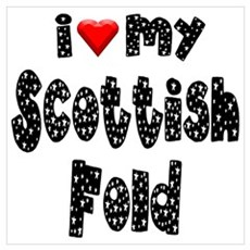 Scottish Fold Poster