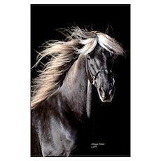 Choco Rocky Mountain Horse Poster