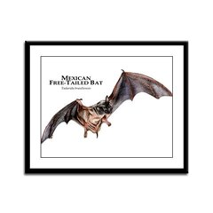 Mexican Free-Tailed Bat Framed Panel Print