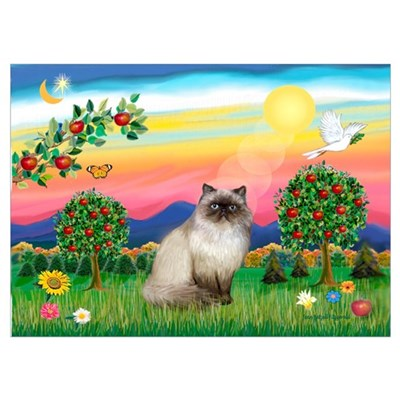 Bright Country / Himalayan Cat Poster
