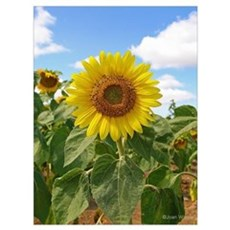 Sunflower Canvas Art