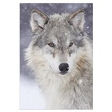 Wolf Wrapped Canvas Art