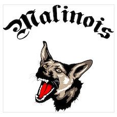 Belgian Malinois Poster