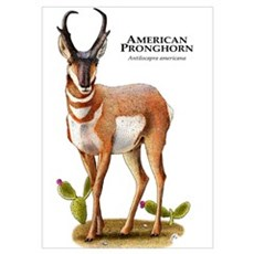 American Pronghorn Poster