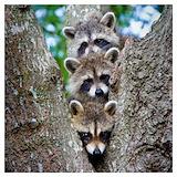 Animals wildlife Posters