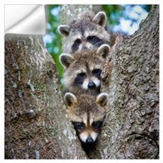 Baby Raccoon Trio Wall Decal