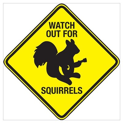 Watch Out For Squirrels Framed Print