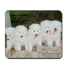 Samoyed Puppies Mousepad