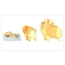 Pomeranian Puppy Collage Poster