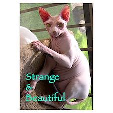 Funny Alien cat pet Wall Art