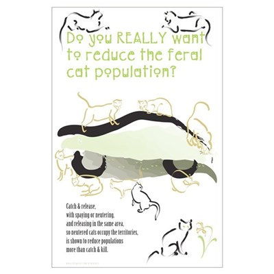 Feral Cats Poster