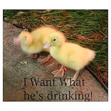 Duckies! Poster