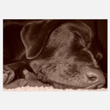 Sleeping Choc Lab