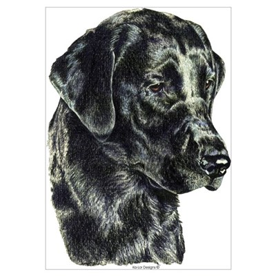 Black Labrador Retriever Head Poster