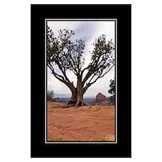 Sedona Tree Poster