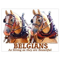 Strong Beautiful Belgians! Poster
