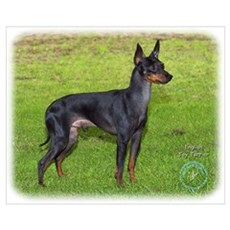 English Toy Terrier 9R095D-062 Poster