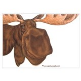 Animals moose Framed Prints