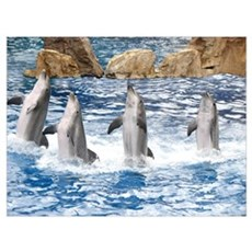 Helaine's Dolphins Poster