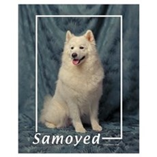 Samoyed-1 Framed Print