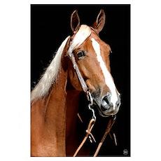 Chocolate flax horse