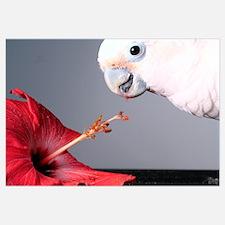 Hibiscus and Cockatoo