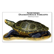 Northern Diamondback Terrapin Decal