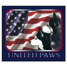 Siberian Huskies US Flag Poster