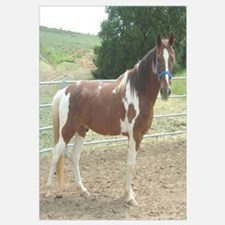 Spotted Saddle Horse