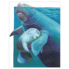 Manatee Mom/Little One Poster
