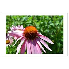 Echinacea Flower Large Poster