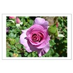 Beautiful Rose Large Poster