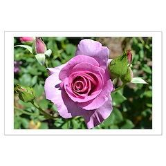 Beautiful Rose Posters