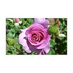 Beautiful Rose 38.5 x 24.5 Wall Peel