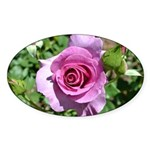 Beautiful Rose Sticker (Oval)