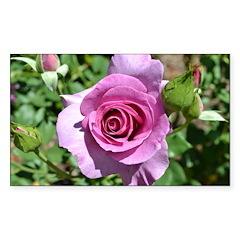 Beautiful Rose Sticker (Rectangle)