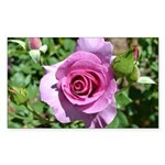 Beautiful Rose Sticker (Rectangle)