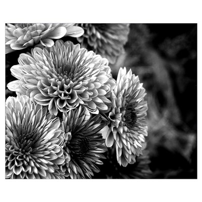 Grayscale Mums Framed Print