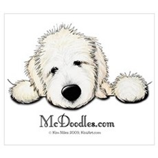 JACK English Goldendoodle Poster