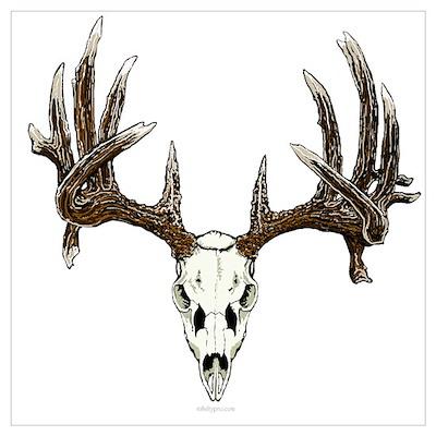 White tail deer skull drawing Poster