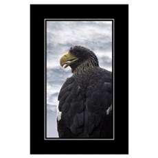 Eagle Composite Poster