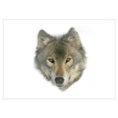 """""""Gray Wolf Face"""" Poster"""